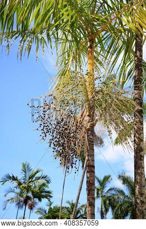 Launch Of Acai Palms
