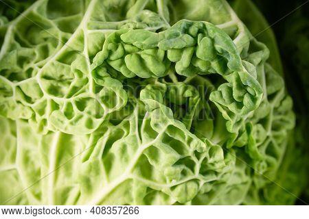 Black Kale Salad Leaves Closeup. Raw Green Organic Lascinato Kale Vegetable. Italian Or Tuscan Cabba