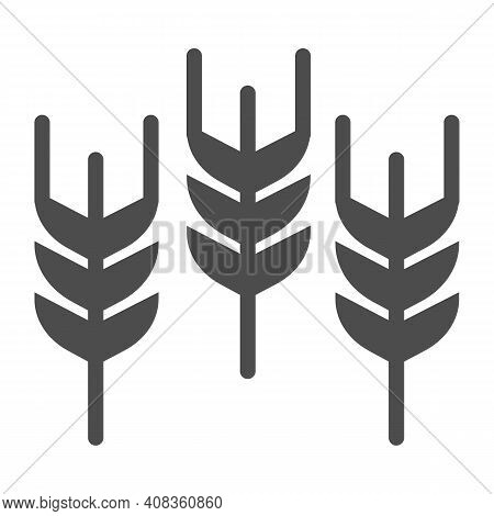 Spikelets Solid Icon, Thanksgiving Day Concept, Wheat Ears Sign On White Background, Three Ear Icon