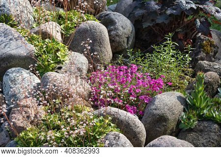 Various Perennial Plants In A Small Rockery In A Summer Garden