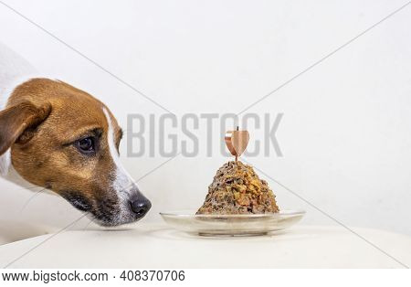 Jack Russell Terrier And Gray Cat Sniffing Pate Cake With Candle, Birthday On A Light Background, Ho
