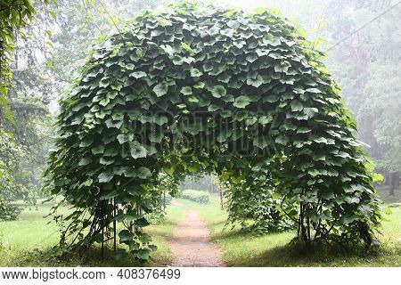 Summer Warm Day. Air Is Impregnated With Evaporations After A Rain. In A Botanical Garden Among Tree