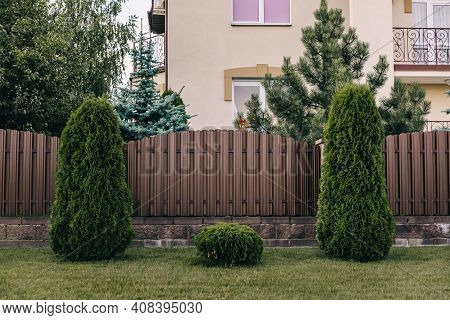 Vertical Sections Of Brown Metal Profile Fence. Live Plantings. Green Thuja, Bushes And Lawn. The Lo