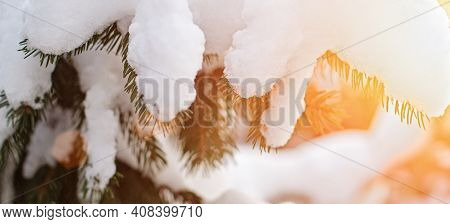 Christmas Fir Branch In Snow Close Up In Sunny Day. Christmas Mood. Christmas Snow Tree