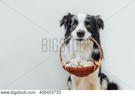 Happy Easter Concept. Preparation For Holiday. Cute Puppy Dog Border Collie Holding Basket With East