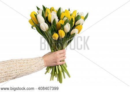Hand Holding A Bunch Of White And Yellow Tulips