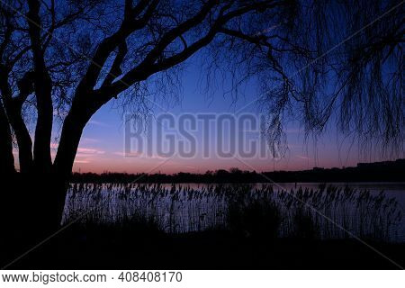 Beautiful Sunset Or Sunrise With View On A Lake. Rural Scene With Silhouette Of Weeping Willow In Th