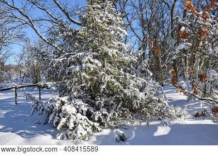 Beautiful Snow Covered Vegetation In A Bright Forest