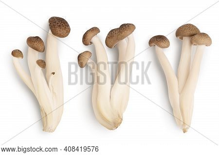 Brown Beech Mushrooms Or Shimeji Mushroom Isolated On White Background With Clipping Path. Top View,