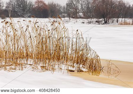 Dry Yellow Reeds (phragmites Australis) At Grey Sunless Foggy Winter Day On Partly Frozen Partly Ope