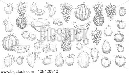 Sketch Fruits Isolated Vector Icons Watermelon, Pineapple, Peach And Mango With Kiwi. Farm Market, O