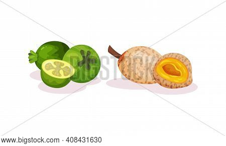Ripe Exotic Fruits With Longan Showing Pulp Vector Set