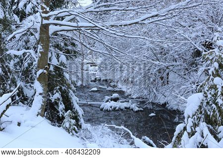 landscape with brook in winter forest