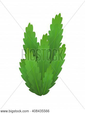 Grass Or Bushes. Green Spring Grass. Fresh Plants, Garden Botanical Greens, Herbs And Leaves Vector
