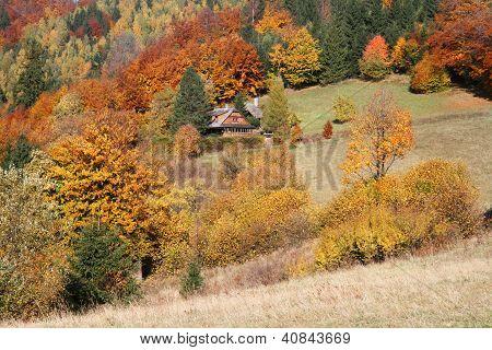 Cottage In Autumn