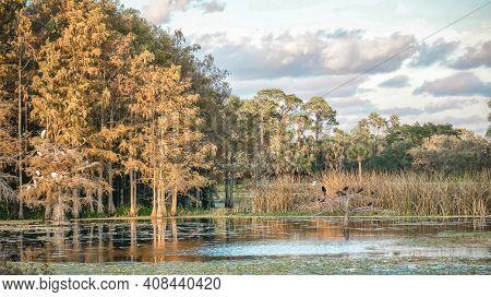 Wetland In Florida Cypress Swamp With Orange Foliage