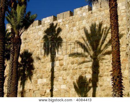 Jerusalem Palm