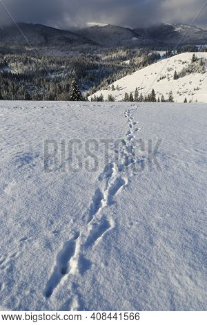 trail across winter mountain meadow in Carpathians, Ukraine