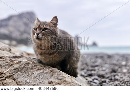Gray Cat Sits On A Stone Close-up Against The Background Of A Blurred Sea Shore