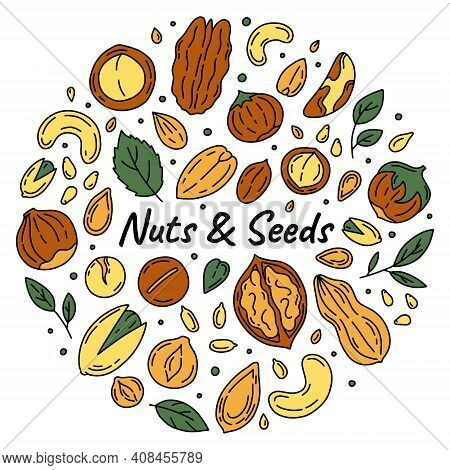 Nuts And Seeds Set Of Vector Icons In The Doodle Style. Walnuts, Macadamia, Hazelnuts And Peanuts On