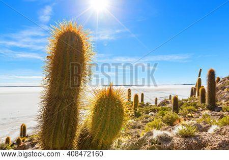 Big cactus on Incahuasi island, salt flat Salar de Uyuni, Altiplano, Bolivia. Unusual natural landscapes deserted solar travel South America