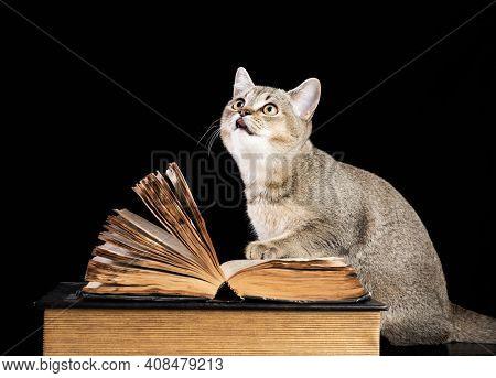 Gray Kitten Scottish Straight Chinchilla Sits Near An Open Book On A Black Background, Funny Muzzle