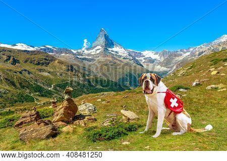 St. Bernard Rescue Dog Standing In Zermatt, Canton Of Valais, Switzerland, With Mount Matterhorn Or