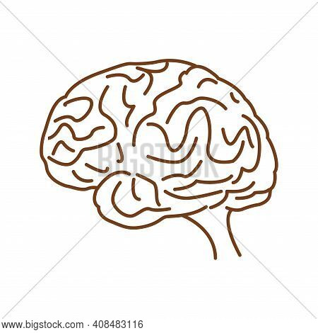 Human Brain Icon - Vector Human Brain Creativity Vs Logic Chaos And Order A Continuous Line Drawing