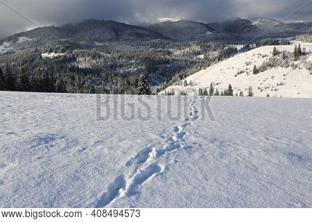 trail on snow meadow in mountains, Carpathians in Ukraine