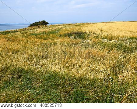 Tranquil Footpath Walking Path On Green Grass By The Ocean Great For Nature Outdoors Hiking Denmark