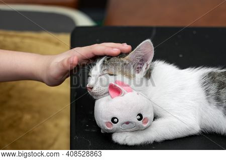 Close Up Hand Stroking The Head Of A Sleeping Kitten