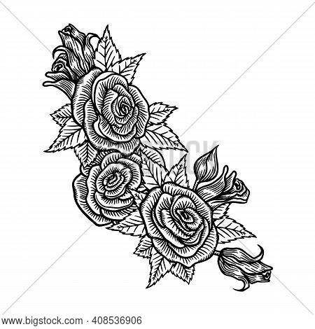Roses Flowers, Vector Sketch Illustration. Hand Drawn Floral Nature Design Elements. Rose Blossom, L