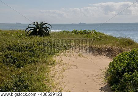 Dune Covered With Vegetation And Ships At Sea