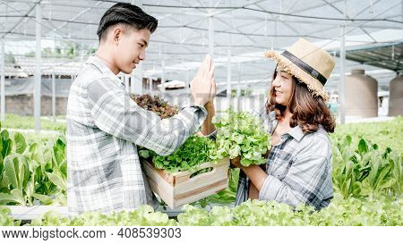Farmer Harvesting Vegetable Organic Salad, Lettuce From The Hydroponic Farm For Customers And Make H