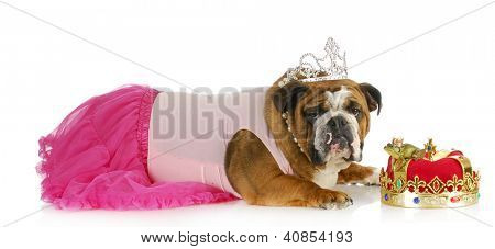 spoiled princess dog not willing to kiss frog in hopes of meeting a handsome prince