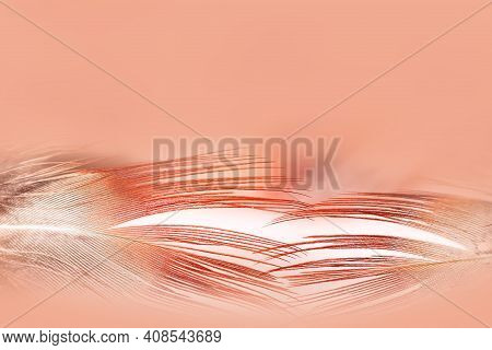 Abstract Pastel Background. Bird Feather Textures For Background, Fantasy, Abstract, Soft Colors. Cr