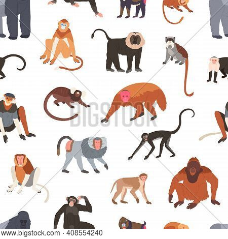 Seamless Pattern With Different Species Of Monkeys Apes, Baboons, Chimpanzees And Macaques. Endless