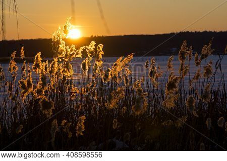 Autumn Landscape Lump At Sunset. Winter Background, Dry Grass Phragmites, In The Rays Of The Evening