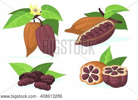 Colorful Cocoa Beans Flat Illustration Set. Cartoon Chocolate Beans From Cocoa Tree With Leaves Isol