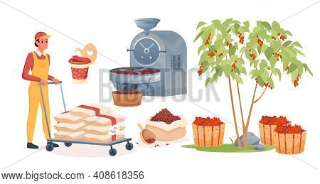 Coffee Production Set, Man Working, Carrying Bags With Raw Fruits Before Roasting Process