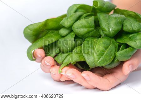 Healthy Eating, Dieting, Vegetarian Food And People Concept - Close Up Of Woman Hands Holding Spinac