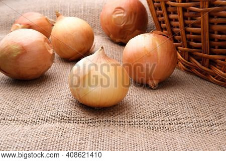 Onions Are Scattered On A Burlap Cloth Near A Wicker Basket.