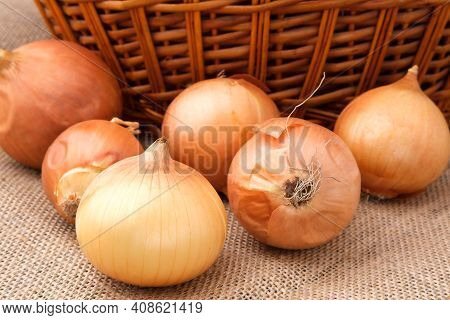 Onion Bulbs Lie In A Heap On A Burlap Cloth Against The Background Of A Basket.