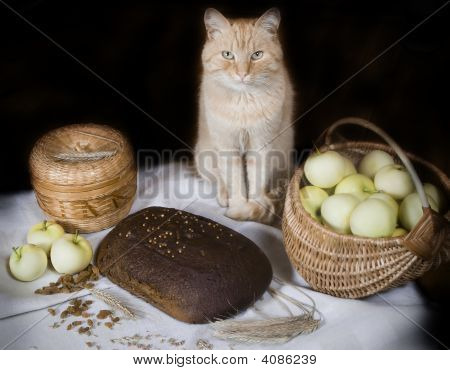 Loaf of house brown bread and cat poster