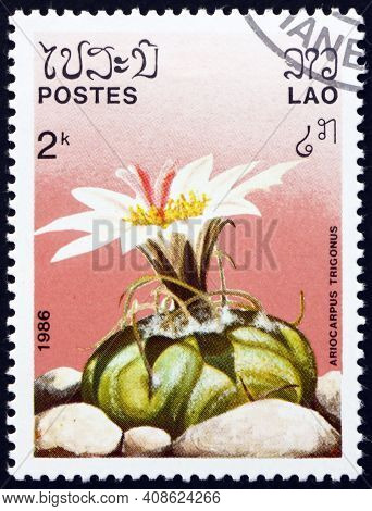 Laos - Circa 1986: A Stamp Printed In Laos Shows Ariocarpus Trigonus, Is A Species Of Flowering Plan