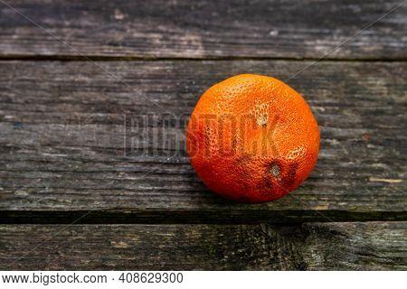 Rotting Tangerine Fruit Close Up Shot On Aged Weathered Pine Wood Boards.