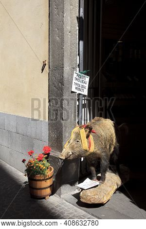 Orvieto (tr), Italy - May 10, 2016: Stuffed Wild Boar Cinghiale Outside A Shop, Orvieto, Umbria, Ita