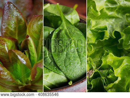 Collage Of Fresh, Raw Greenery And Herbs. Lettuce And Spinach For Healthy Vegan Food.