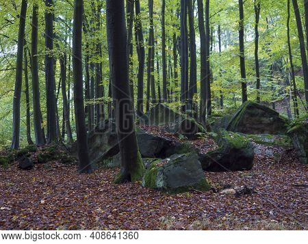 Mysterious Autumn Deciduous Beech Tree Forest With Moss Covered Stones And Ground Covered With Falle