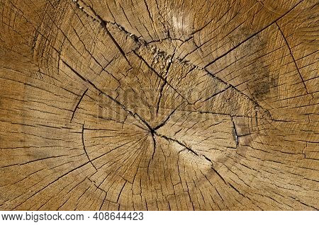 Texture Of Beech Wood On Background And